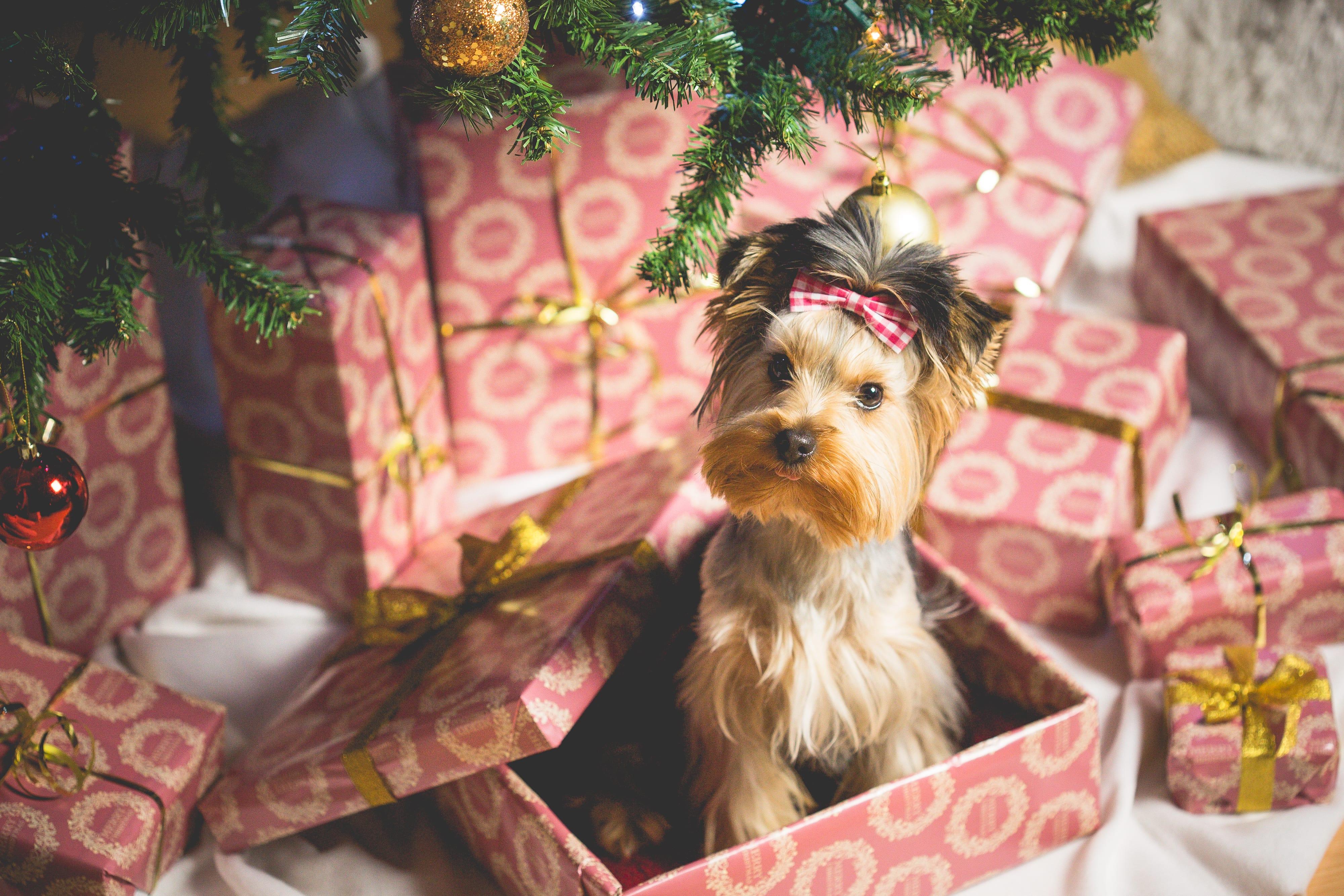 Patenschaft für einen Hund verschenken
