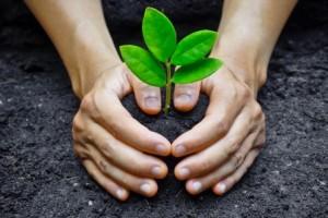 Baumpatenschaft rettet Leben